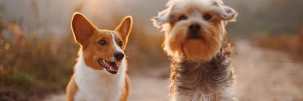 Hundinfo.se - allt om människans bästa vän!